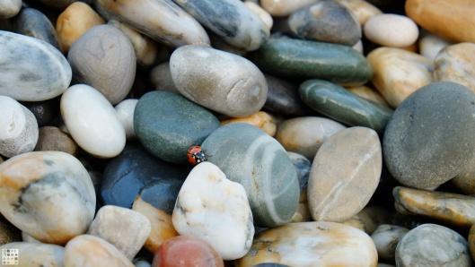 Ladybug on pebbles