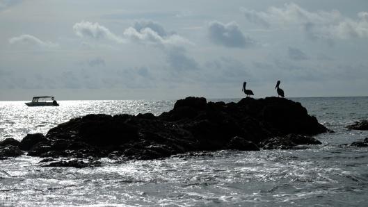 preview.pelican_1
