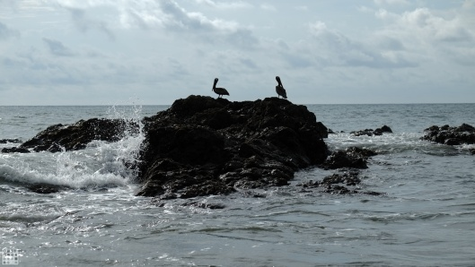 preview.pelican_2